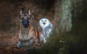 dog, animals, owl, photography, birds, nature