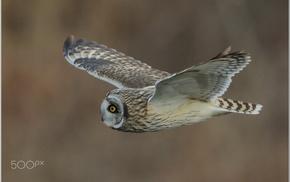 birds, photography, owl, animals