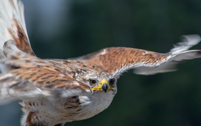 birds, nature, animals, photography