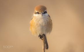 animals, birds, photography, nature