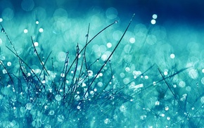 blue, filter, bokeh, nature, plants