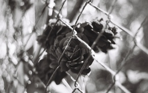 chain, link, monochrome, photography, flowers