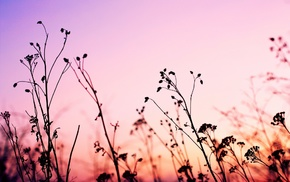 nature, plants, photography, landscape, pink