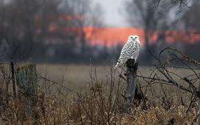 nature, birds, owl, animals, photography