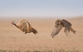 birds, animals, photography, nature