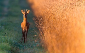 animals, photography, deer, nature