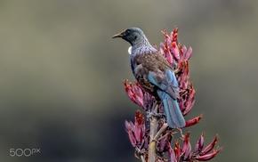 animals, birds, photography