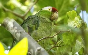 birds, animals, parrot