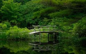 bridge, trees, nature
