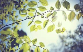 trees, Sun, nature, branch, leaves, depth of field