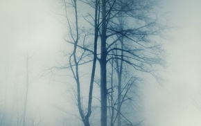 trees, nature, mist, photography, winter