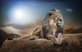 animals, lion