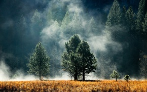 smoke, grass, trees, mist