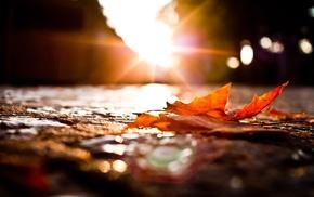 fall, macro, sunset, photography, leaves