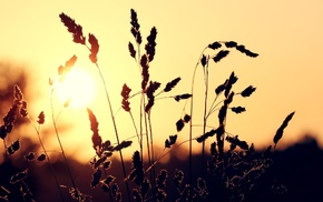 sunset, photography, nature, plants, depth of field