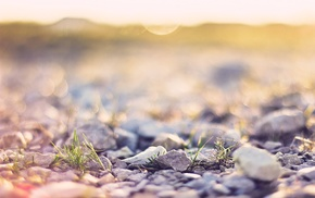 depth of field, plants, photography, nature, gravel