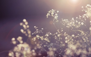 photography, plants, leaves, Sun, depth of field, nature