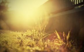 nature, depth of field, plants, Sun, photography