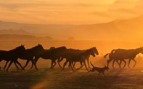 horse, animals, sunlight, photography