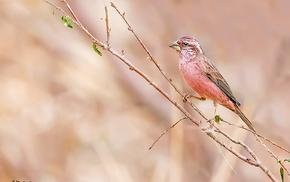 photography, nature, animals, birds