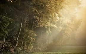 trees, plants, nature, photography, forest clearing, sun rays