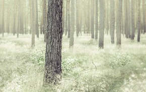 nature, plants, forest, trees, photography