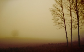 nature, trees, field, photography, mist