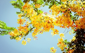 plants, photography, leaves, nature, branch, flowers