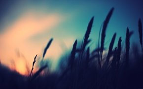 nature, plants, depth of field, photography, sunset, blurred