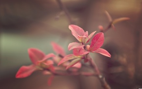 flowers, plants, branch, photography, nature, macro