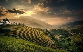 Indonesia, rice paddy, sky, field, mountains, mist