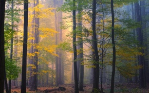 forest, colorful, nature, morning, fall, mist