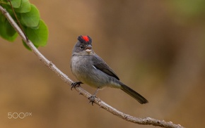 photography, birds, animals