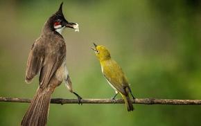 birds, photography, animals