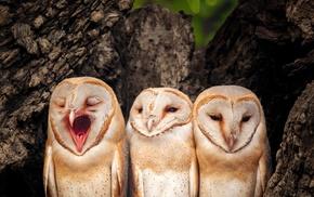 owl, birds, yawning, animals, photography