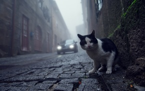 cat, photography, street, cobblestone, animals, worms eye view