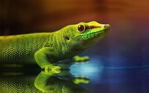 photography, animals, lizards, reptiles