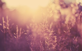 photography, sunset, plants, depth of field, nature