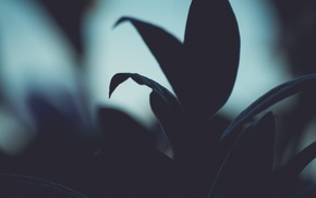 leaves, photography, plants, macro, nature