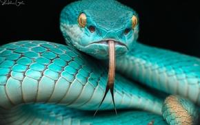 photography, animals, snake