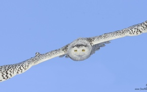 photography, animals, birds, owl