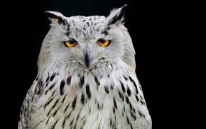owl, animals, photography