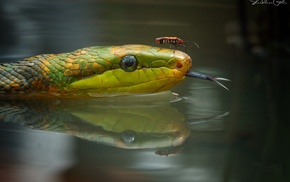 snake, reptiles, reflection, photography, animals