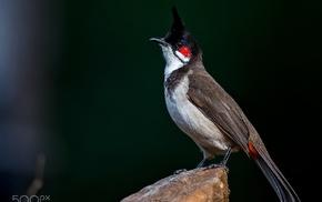 animals, photography, birds