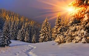 sunlight, pine trees, trees, nature, sun rays, footprints