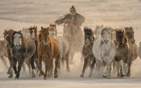 animals, winter, photography, snow, nature