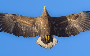 eagle, animals, photography