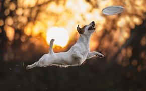 sunlight, dog, bokeh, jumping, photography, animals