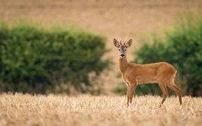 animals, photography, deer