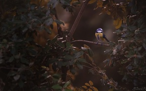 leaves, animals, birds, photography, titmouse